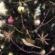 Christmas Lashes